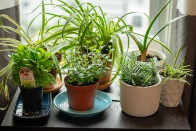 herb garden brexit grow your own the cooking academy
